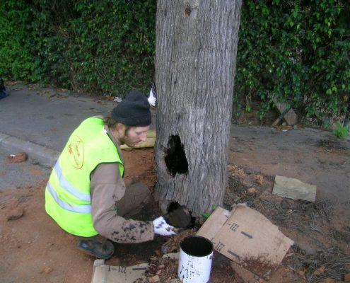 שי לעץ שיקום עצים